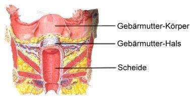 nach gebärmutterentfernung blutungen